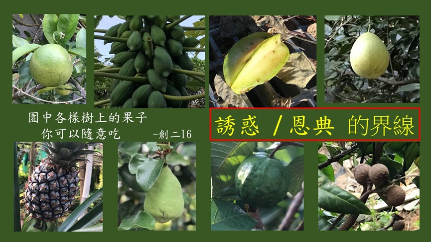 Read more about the article 誘惑/恩典的界線